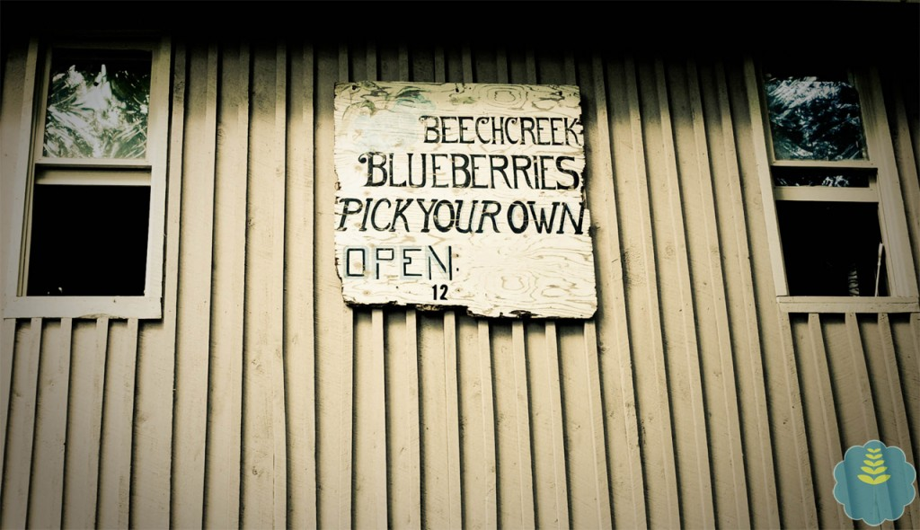 I loved this sign hanging on the side of the Kown's shed - from entrepenurial days gone by